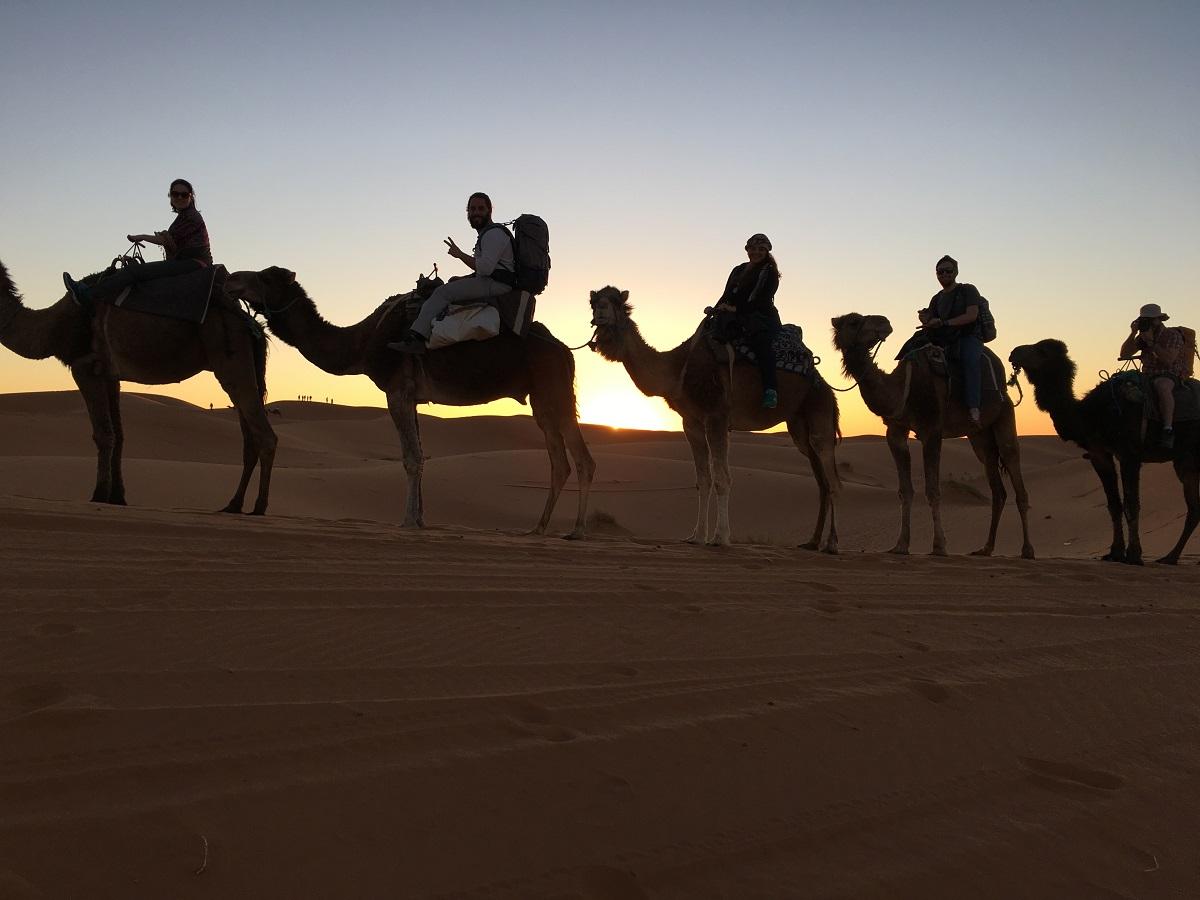 camelos enfileirados