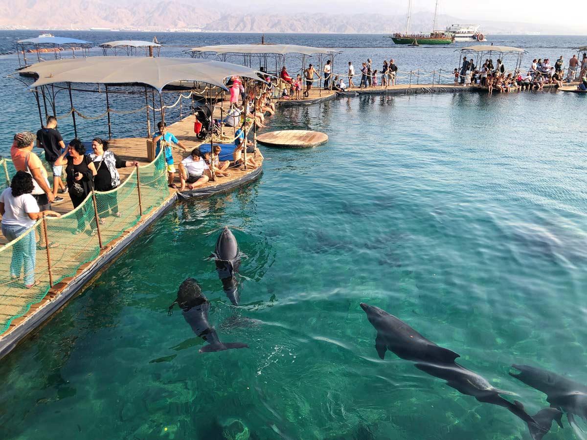 golfinhos nadam em eilat em israel