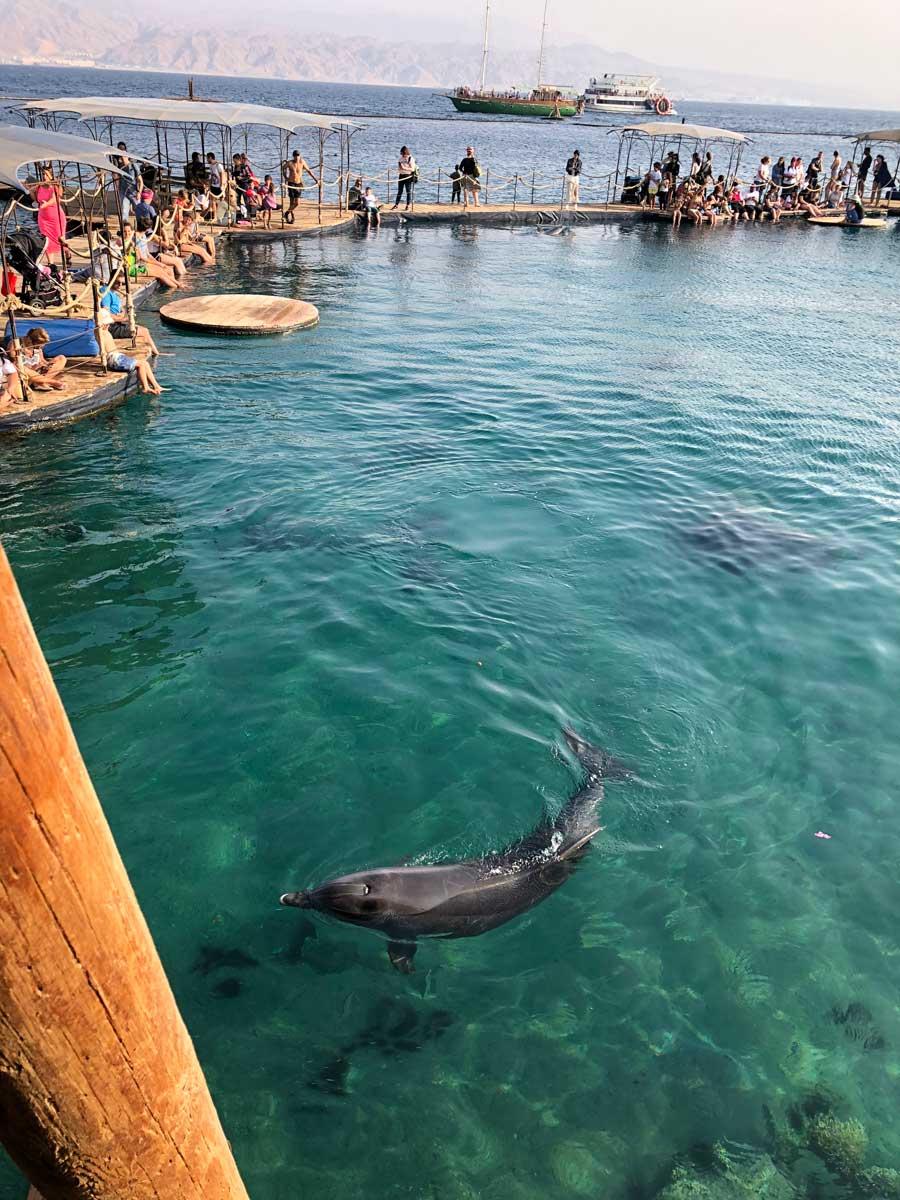 golfinhos no dolphin reef em eilat em israel