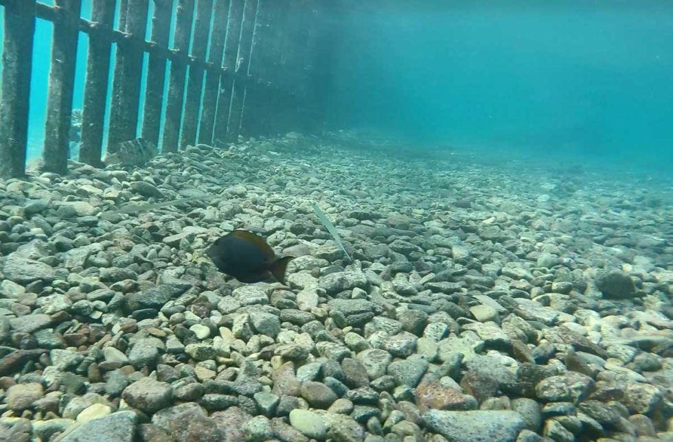 mergulho em eilat, Israel. Imagem mostra o fundo do mar