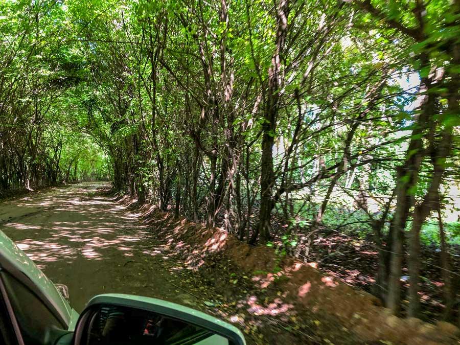 estrada interior de alagoas viagem de carro pelo estado