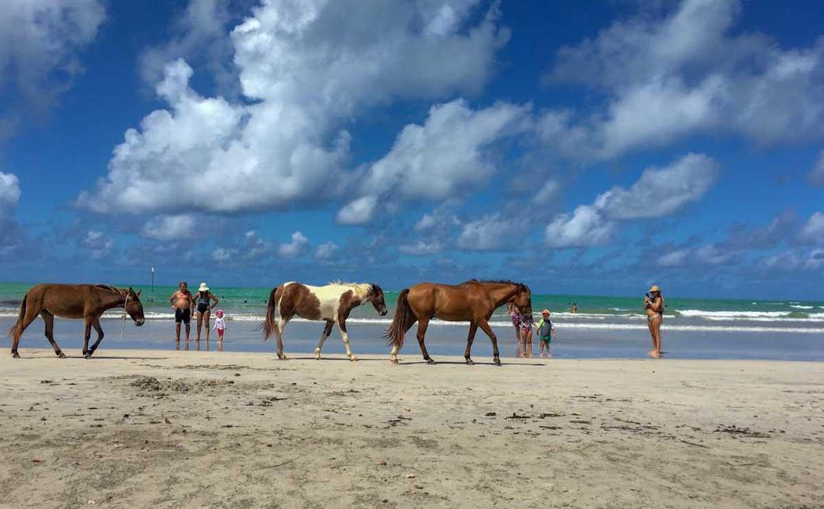 cavalos passeiam na praia de paripueira, no Alagoas